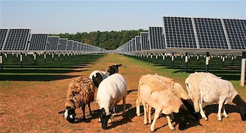 SAS-Solar-Sheep