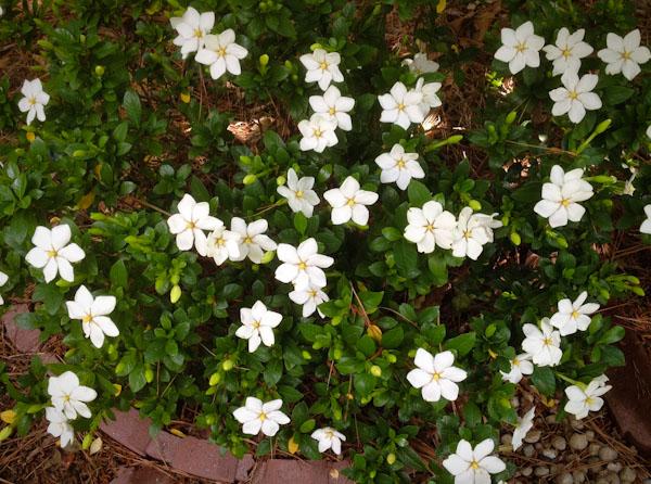 spring-garden-cary-0466