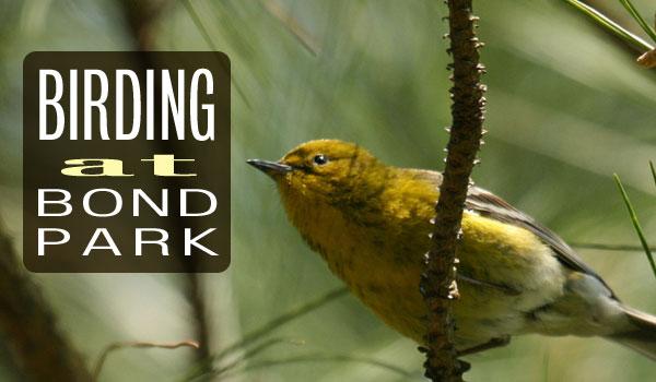 birding-bond-park