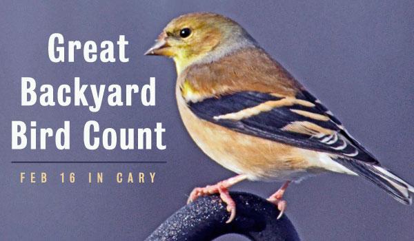 backyard-bird-count-cary