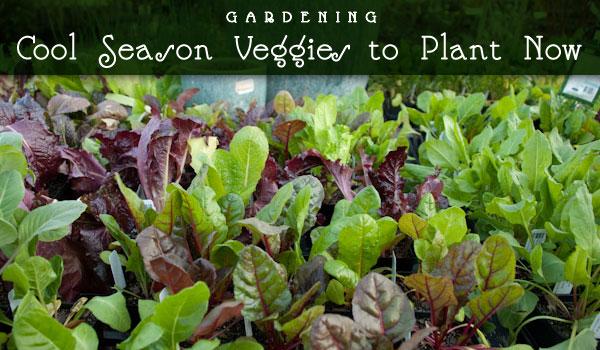 spring-vegetables