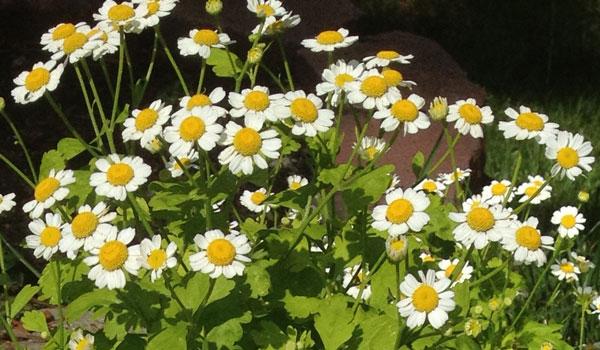 summer-flowers-4