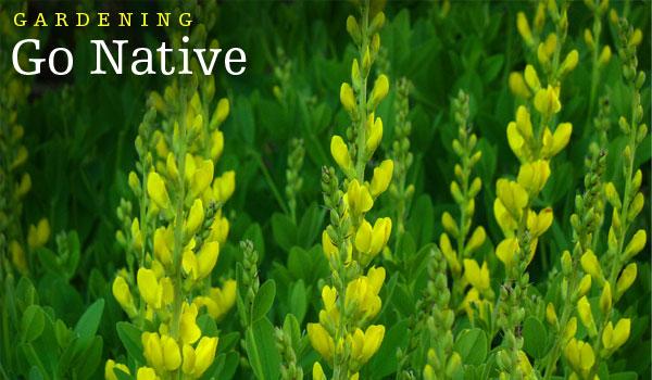 gardening-go-native-nc