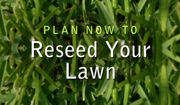 reseed your lawn