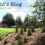 harolds blog - budget