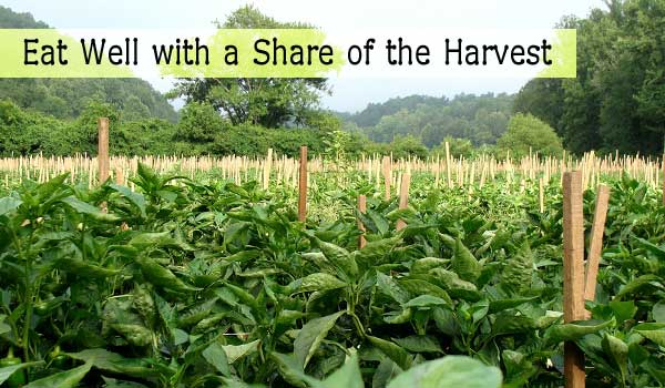 share of the harvest