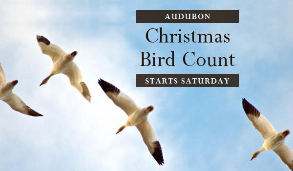 bird-count