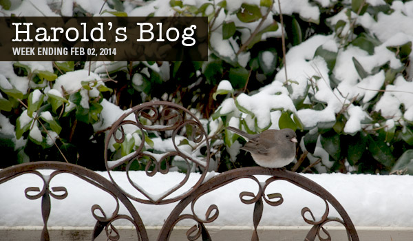 harolds-blog-snow