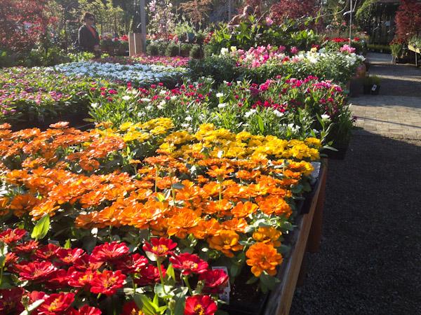 spring-gardening-3481