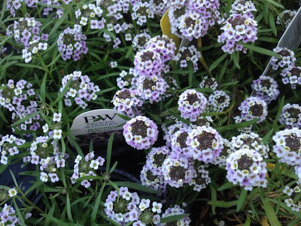 spring-gardening-3492