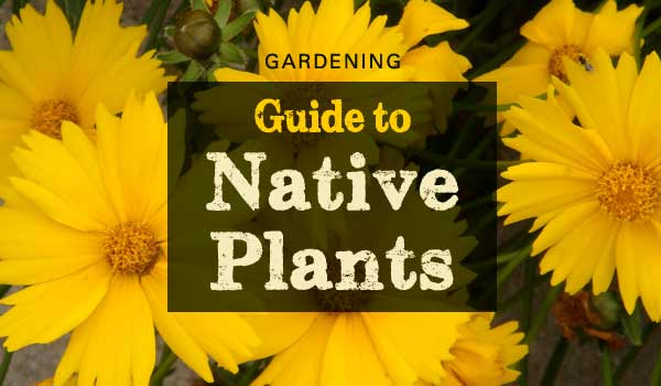 gardening-native-plants