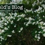 harolds-blog-0615