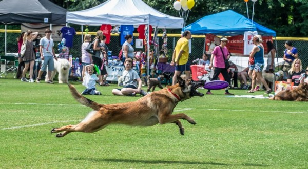 One of hundreds of action shots of all manner of dogs catching frisbees.