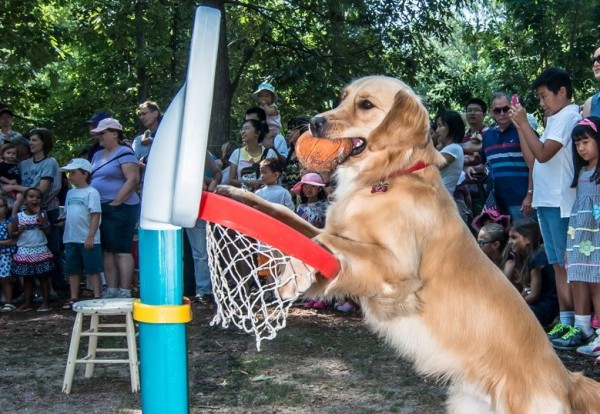 dogs got in on the fun with a talent show