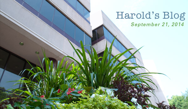 harolds-blog-0921
