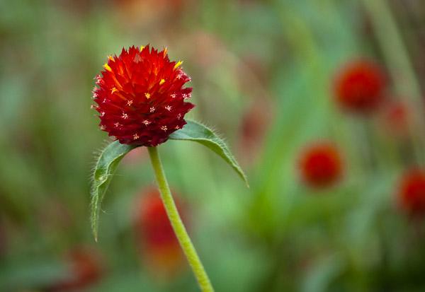 sarah-duke-gardens-0150