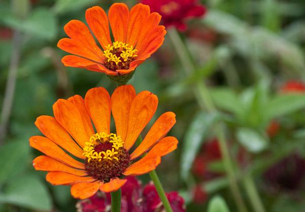 sarah-duke-gardens-0156