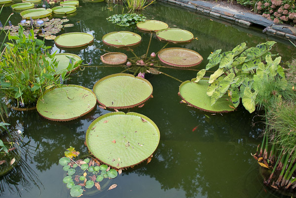 sarah-duke-gardens-0173