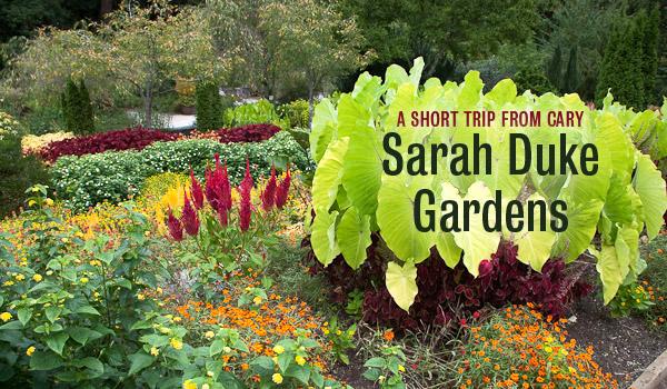 sarah-duke-gardens