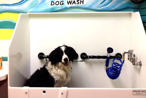 AniMall's in-store dog wash makes bathing your furry friend easy and fun.