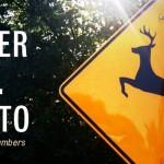deer-vs-auto