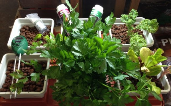 Hydroponic growing goes mainstream with this system for indoor soil-less growing