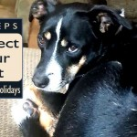 protect-your-pets-holidays