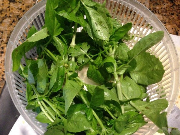 first step: wash and dry your fresh Basil leaves