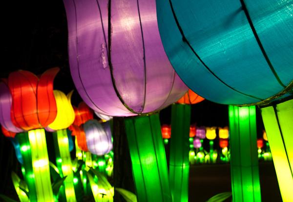 chinese-lantern-0036
