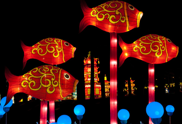 chinese-lantern-0084
