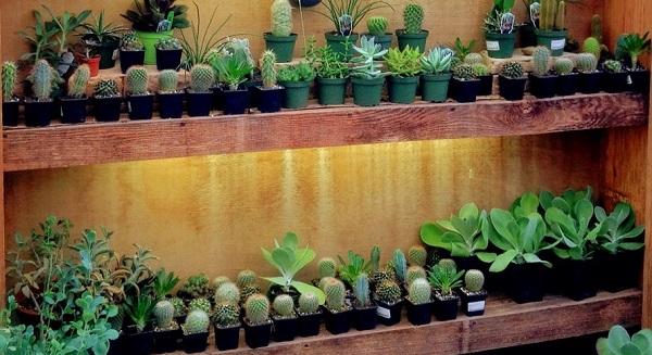 Succulents at Garden Supply.