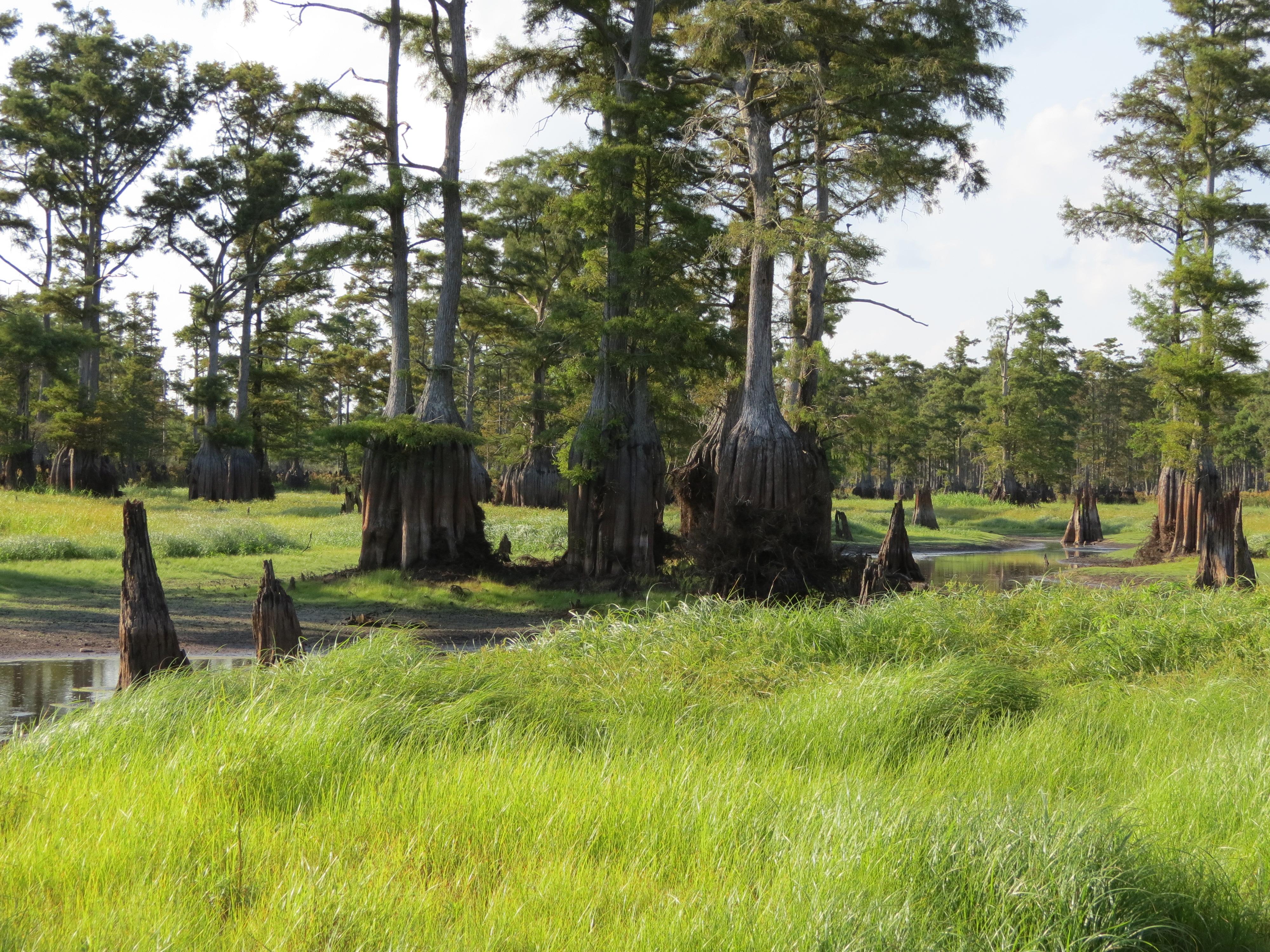A wetland in Cumberland County.