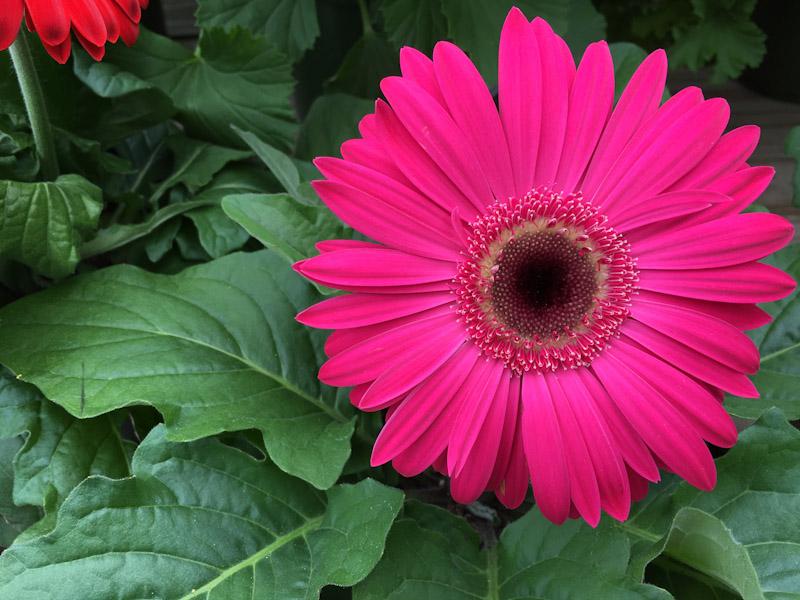 gardening-0612