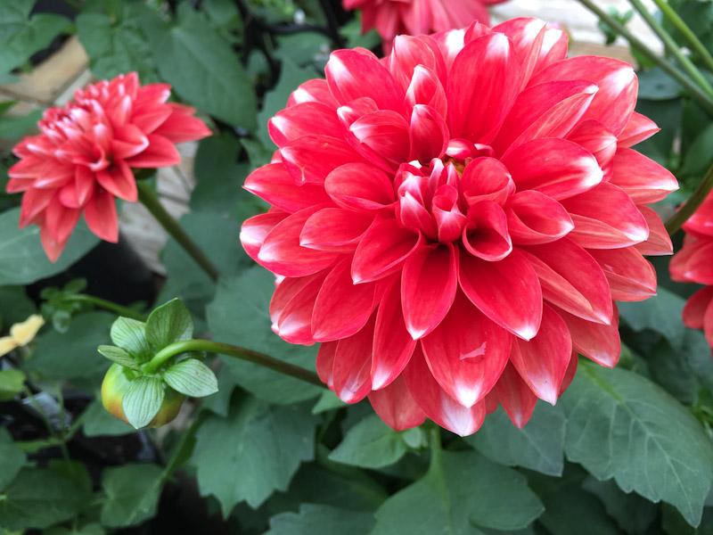 gardening-0626