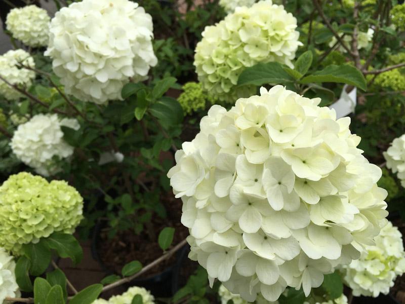 gardening-0628