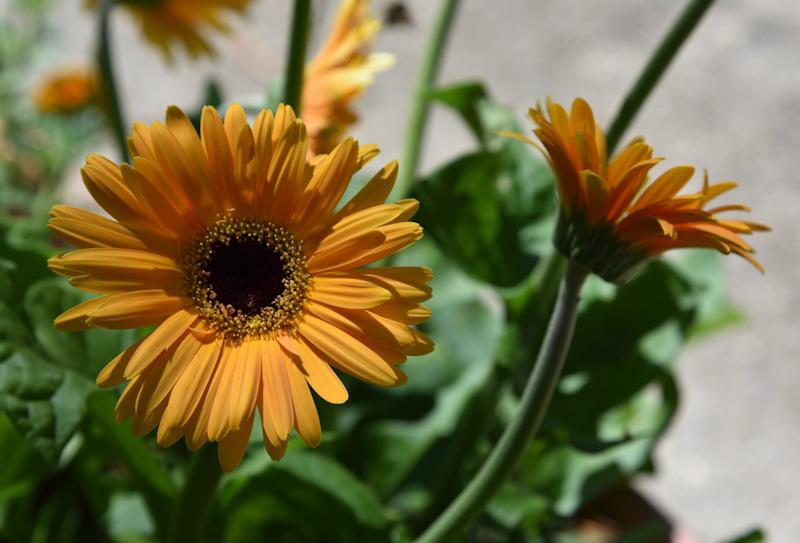 outdoor-room-gardening-800-4393