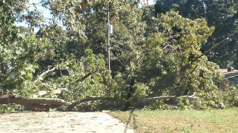 hurricanetree1