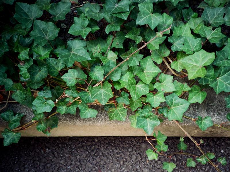 fall-planting-4