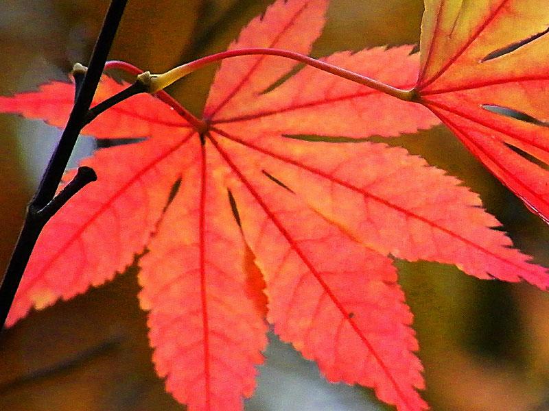 fall-planting-5