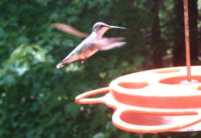 Cary Bird