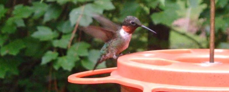 Cary Birds